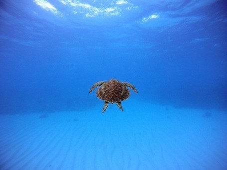 Spectacular Entries to the 2012 National Geographic Photography Contest | Colossal | What Surrounds You | Scoop.it