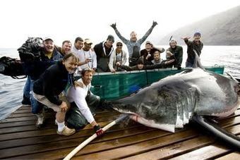 Shark Men Series to Start Chumming in False Bay Today! — Indigo Scuba | Indigo Scuba | Scoop.it