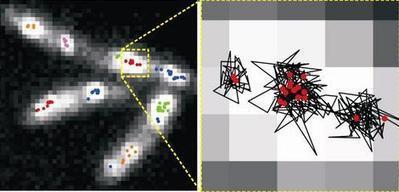 Laser spotlight reveals machine 'climbing' DNA | Amazing Science | Scoop.it