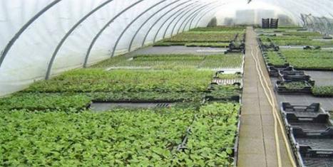 Les «10 journées agricoles» du gouvernement gabonais - gabonreview.com | Développer l'industrie agroalimentaire en Afrique | Scoop.it