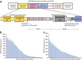 Precise and reliable gene expression via standard transcription and translation initiation elements | SynBioFromLeukipposInstitute | Scoop.it