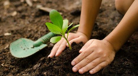 Inde : 50 millions d'arbres plantés en 24h pour les générations futures | The Blog's Revue by OlivierSC | Scoop.it