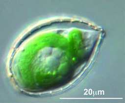 This Little Amoeba Committed Grand Theft - Rutgers (2016) | Ag Biotech News | Scoop.it
