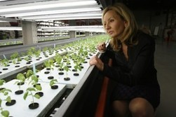 Indoor farm goes 'mega' as fledgling industry tries to become more sustainable - Washington Post | Growing Food | Scoop.it
