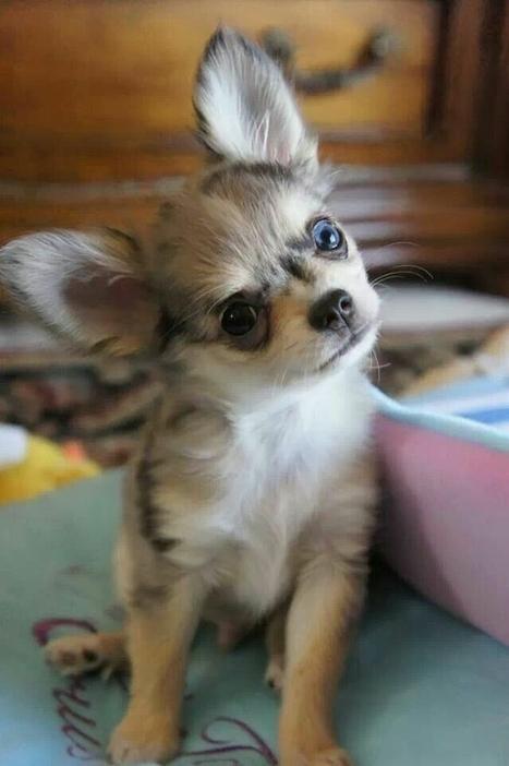 Curiosità animali: Cosa dare da mangiare ai cani e i gatti d'estate   Focus Wild   Chic4Dog Care   Scoop.it