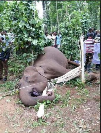 Four arrested for killing wild elephant in Wayanad | Pachyderm Magazine | Scoop.it