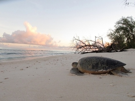 Un fait très rare ! Une tortue verte a changé de lieu de nidification préférant les îles de Tanzanie à l'Atoll d'Aldabra | Biodiversité & Relations Homme - Nature - Environnement : Un Scoop.it du Muséum de Toulouse | Scoop.it