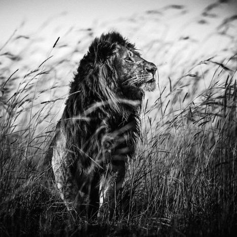 Africa by Laurent Baheux | As digitally seen ... | Scoop.it