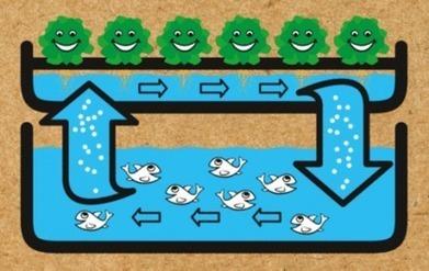 L'aquaponie, une nouvelle méthode pour développer l'agriculture urbaine - Reporterre | AgInterest | Scoop.it