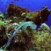 Avec le réchauffement, les espèces marines migrent vers les pôles | Développement durable & Environnement | Scoop.it