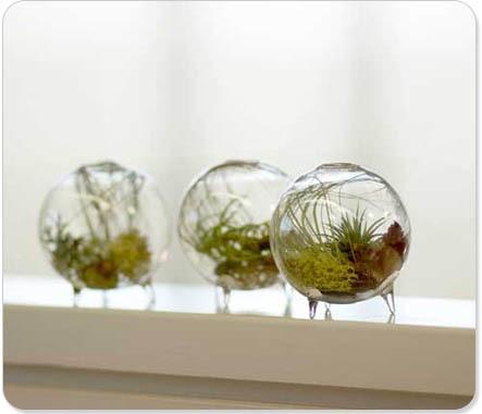 shelterrific » Blog Archive » desk zen: footed aeriums   Garden Designer   Scoop.it