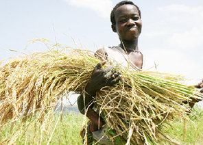 Home   NEPAD CAADP: Agriculture, Food Security and Nutrition in Africa   Scoop.it