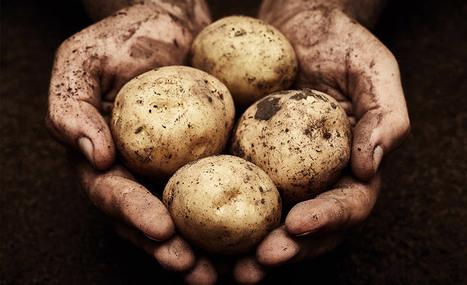 Luttons contre le gaspillage alimentaire en ramassant les pommes-de-terre esseulées | Entrepreneuriat et économie sociale | Scoop.it