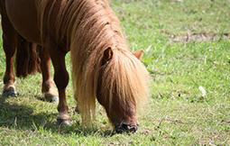 Pension, pension au pair, un cheval à la maison... Le point sur les différentes formules d'hébergement du cheval - Cheval Partage   avenir   Scoop.it