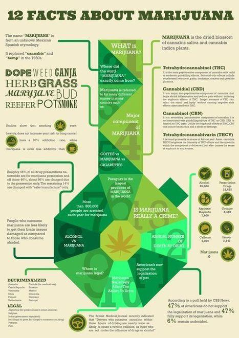 Marijuana Infographics | Mainstream Mary Jane. Should Marijuana be made legal in the United States? | Scoop.it