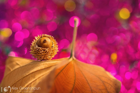 Whispers Of Autumn In Magical Photography By Alex Greenshpun | familyonline | Scoop.it