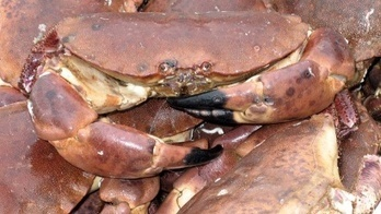 Crabs delay NY flight, passengers crabby | The Vacation & Trip Destination Ideas Round-up | Scoop.it