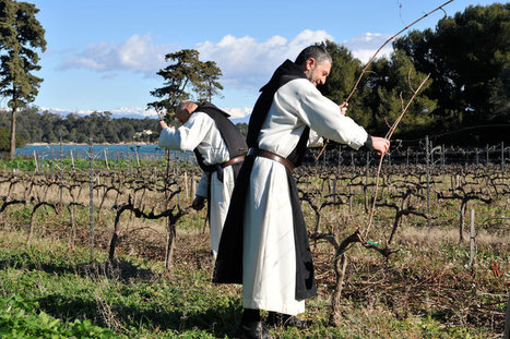 Laborare est orare : les vendanges démarrent à l'abbaye Saint-Honorat (à Lerins) | Wine and the City - www.wineandthecity.fr | Scoop.it