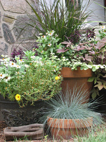 The Gardening Coach for Utah Gardeners and Landscape Design - March 2013: Drip Irrigation for Containers and Box Gardening | Annie Haven | Haven Brand | Scoop.it