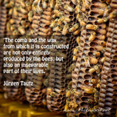 It's the birthright of bees to build comb | Aquaponics World View | Scoop.it