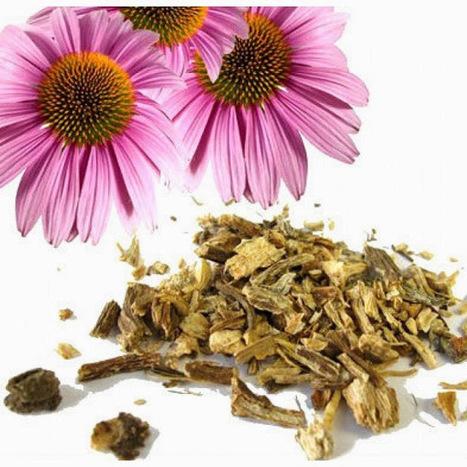 CENTRO de PERIÓDICOS: 10 hierbas y especias para fortalecer tu sistema inmunológico | TIC TAC PATXIGU NEWS | Scoop.it