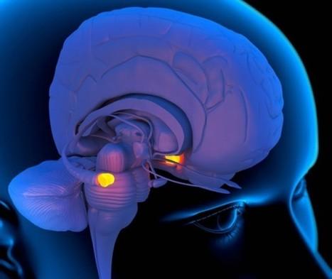 ScienceShot: Shiny Happy Neurons | Neurobiology of Fear | Scoop.it
