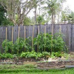 Five Elements of Vegetable Garden Planning That You May Not Have Considered | Sustainable Futures | Scoop.it