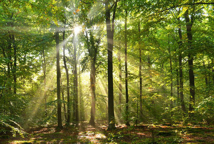 Le prix des forêts reste stable - Maison individuelle - Le Particulier   Les investissements atypiques   Scoop.it