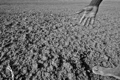 US corn yields are increasingly vulnerable to hot, dry weather, study shows | Sustain Our Earth | Scoop.it