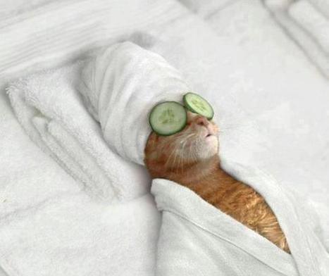 Prenez soin de vous   Histoire de chats   Scoop.it