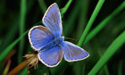 Butterfly numbers fell by a fifth in 2011, study shows   100 Acre Wood   Scoop.it