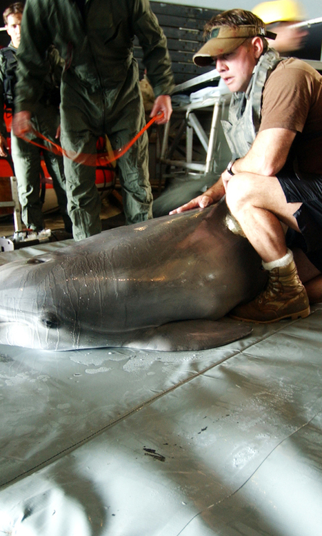 The #Navy's #Deadly Obsession with #Whales | Sustain Our Earth | Scoop.it