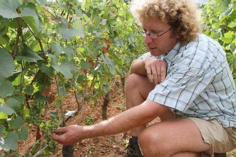 VENDANGES: Les vignerons bio sont «meurtris» - Bienvenue sur Infos Dijon   Vins nature, Vin de plaisir   Scoop.it