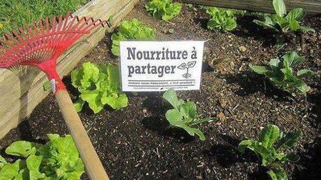 Les Incroyables comestibles poussent au Quai vert - Ouest-France | Permaculture en France | Scoop.it