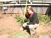Perennial Foods | Edible Garden | Scoop.it
