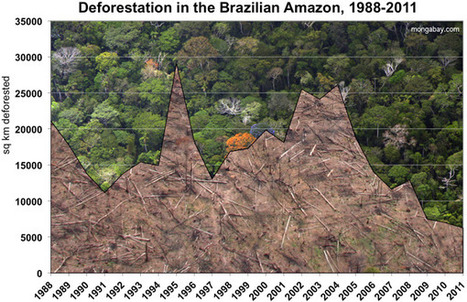 Amazon deforestation tracking higher in Brazil | Wildlife and Environmental Conservation | Scoop.it