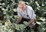 Field trials confirm reliability of 'super broccoli' | Articles mentioning John Innes Centre | Scoop.it