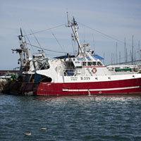 La plupart des espèces de thons sont menacées par la surpêche - Rubrique Biodiversité sur Ecologie.tv   Notre planète   Scoop.it