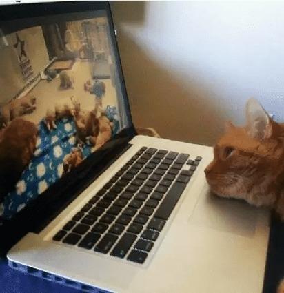 20 chats derrière un ordinateur : la preuve ultime que ces félins préparent un plan pour dominer le monde ! | Mediapeps | Scoop.it