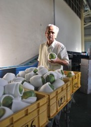 Aid-for-trade should support the Pacific's 'hidden strength ... | Linking small holder farmers to markets | Scoop.it