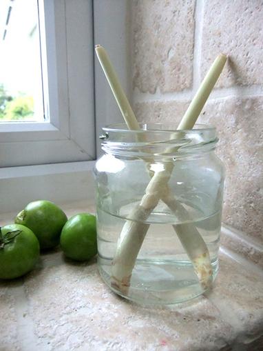 10 légumes qu'on peut faire repousser - Vite une recette | Actus décalés | Scoop.it