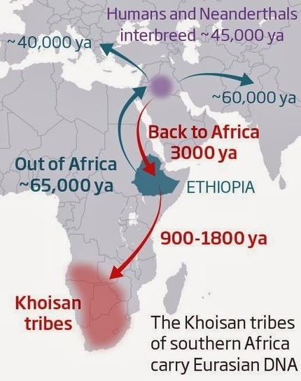 The Archaeology News Network: Humanity's forgotten return to Africa revealed in DNA | Aux origines | Scoop.it