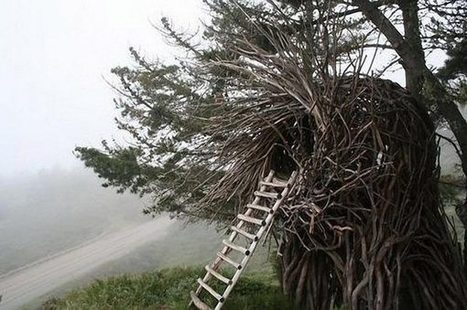 We really, really want one of these gorgeous human-sized bird's nests | climate change | Scoop.it
