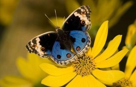 L'Ile-de-France a perdu 21% de ses oiseaux et 8% de ses espèces de papillons en dix ans | Biodiversité & Relations Homme - Nature - Environnement : Un Scoop.it du Muséum de Toulouse | Scoop.it