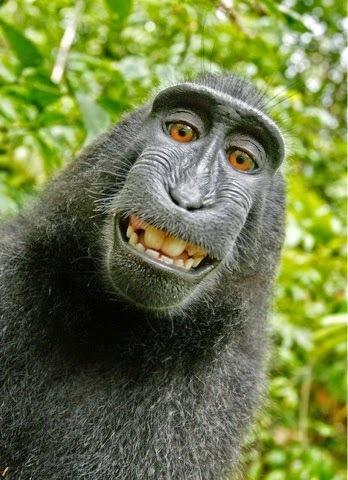 miApples - tech/social/news: Monkey Business   Apple   Scoop.it