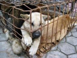 Derechos del animal: La Organización de las Naciones Unidas aprobó la Declaración Universal de los Derechos de los Animales  en 1977 | experimentación con animales | Scoop.it