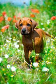Bunny's Blog: Dogington Post Prepares Dog Owners for the Arrival of Spring | Pet News | Scoop.it