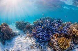 We can fix the Great Barrier Reef | Our Oceans | Scoop.it