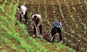 Méditerranée: la mise en mouvement de l'agriculture familiale | Agricultures familiales | Scoop.it