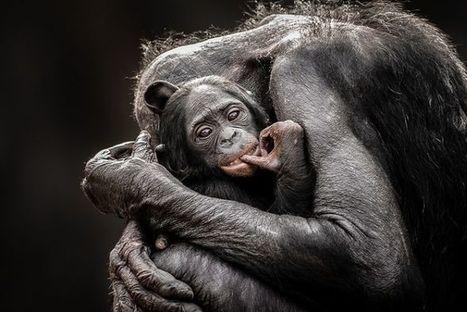 Cele mai frumoase ANIMALE SALBATICE surprinse in IMAGINI SPECTACULOASE!   Cap Limpede   Scoop.it